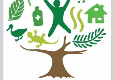erdők nemzetközi évének logója