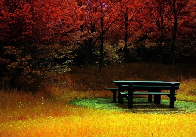 Bench_In_The_Forest_4276