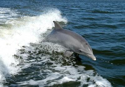 delfin_1