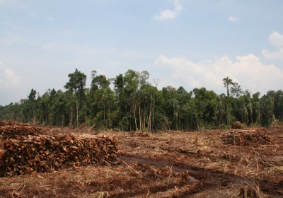 rainforest-destruction