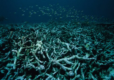 dyingcoralreef