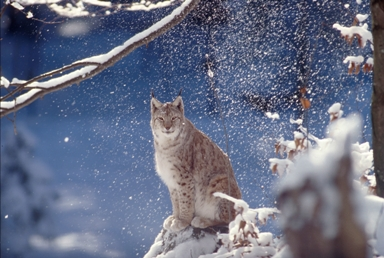 Foto_Roger_Leguen_WWF_Canon