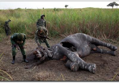 elephantpoachers