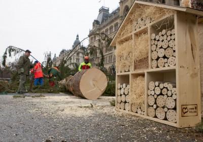 MA 49: Baum fällt! Aus Weihnachtsbaum vom Rathausplatz werden Nützlingshotels
