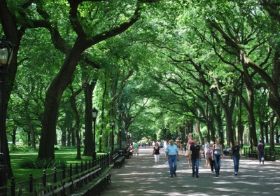 the-majestic-trees-of-central-park
