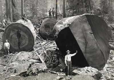 Lumberjacks-From-California-kaliforniali-oduncular-5_jpeg_492x0_q85_crop-smart