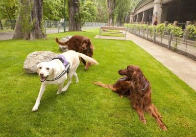 F¸r ein Miteinander von Mensch und Hund in Wien: Tierschutzstadtr‰tin Sima pr‰sentiert Hunde-Paket 2013