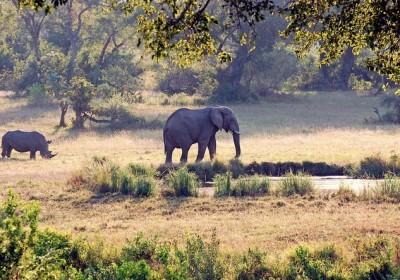 elephant_and_rhino.jpg.662x0_q100_crop-scale