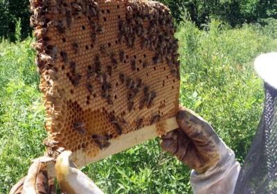 beehive-photo-01.jpg.492x0_q85_crop-smart