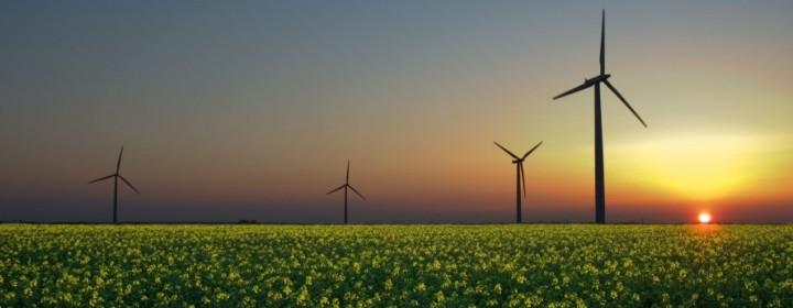 wind-turbines-with-rapeseed-889x579