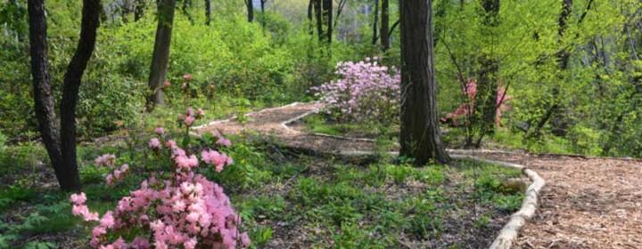 Hallett-Nature-Sanctuary