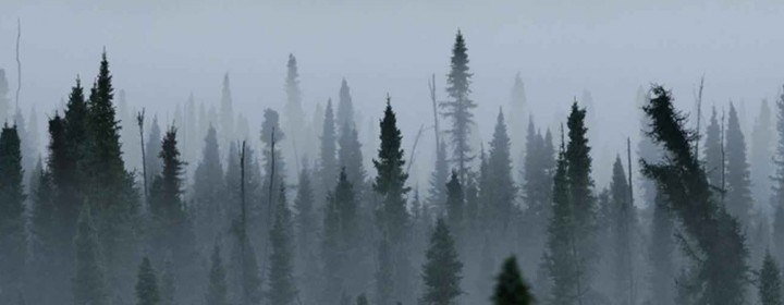 Black-Spruce-Forest-Full-Width-1020x390