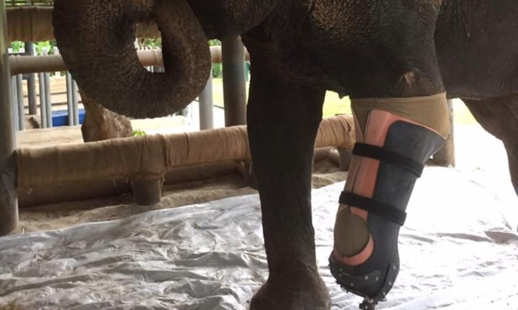 mosha-elephant-prosthetic-03-1020x610