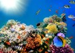 Coral-Reefs-Fish-Background