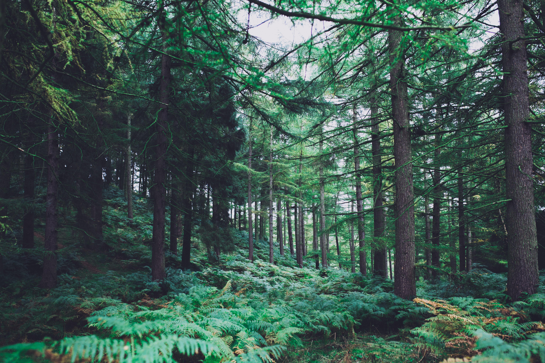 A fák kommunikálnak egymással