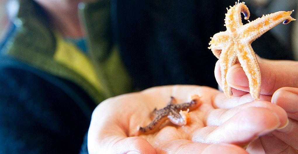 Japán partjainál honos állatokat találtak az USA partjainál