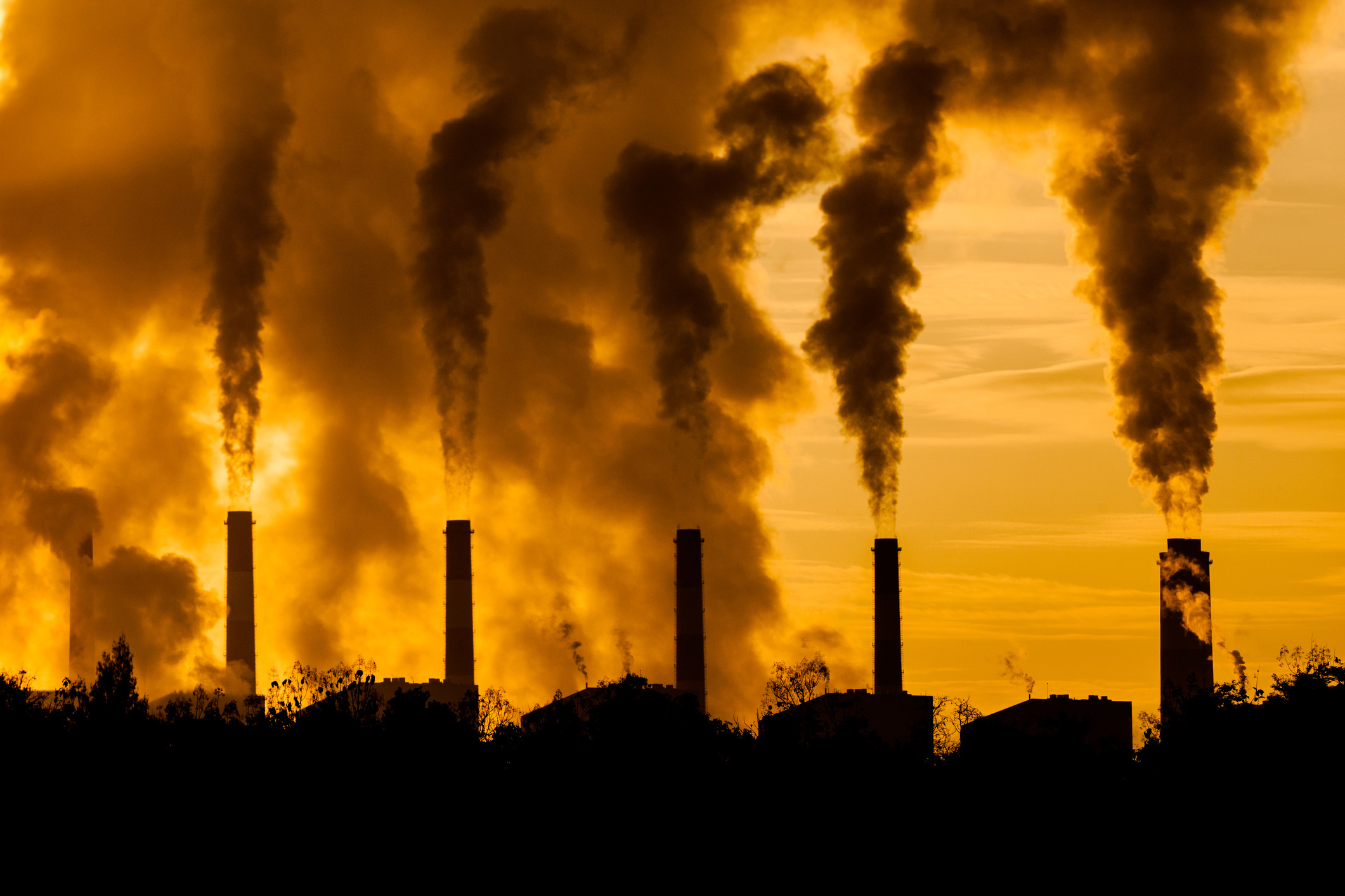 factory plants