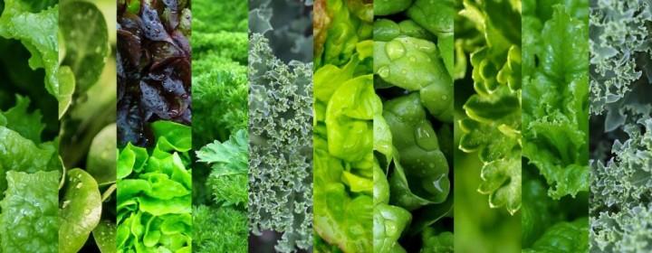 Mixed-Greens-2-1024x631