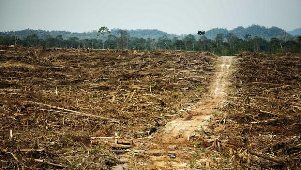 Ecocide-Deforestation-620x350