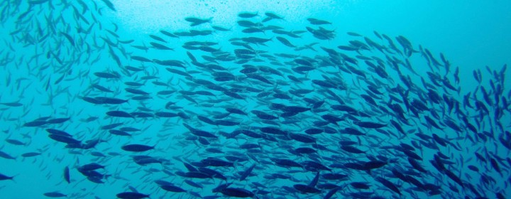 lots-of-fish